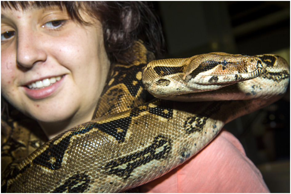 Mercy Smith, of Murray, holds 'Silvia,' her seven-foot, forty-pound red-tailed boa constrictor, during ReptiDay at the Davis County Fairgrounds Saturday August 30, 2014.